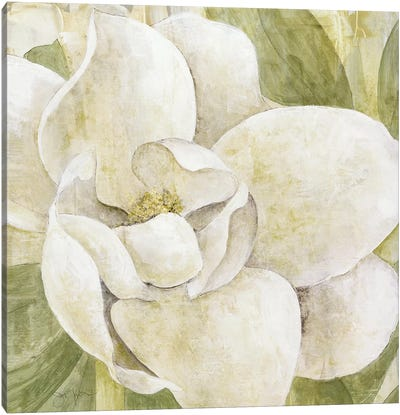 Magnolia Dolce Canvas Art Print
