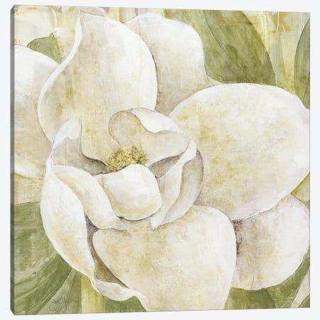 Magnolia Dolce Canvas Print #TAV38} by Tava Studios Art Print