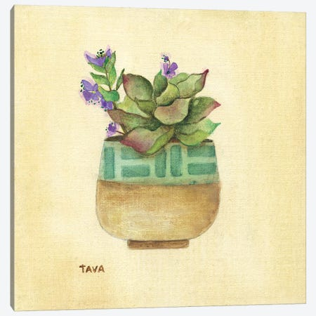 Flowering Succulent II Canvas Print #TAV97} by Tava Studios Canvas Art