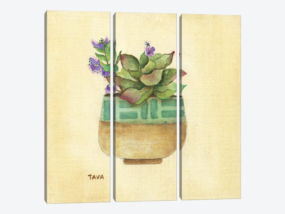Flowering Succulent II by Tava Studios 3-piece Canvas Print