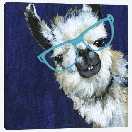 Gentleman Llama Canvas Print #TAV99} by Tava Studios Canvas Art Print