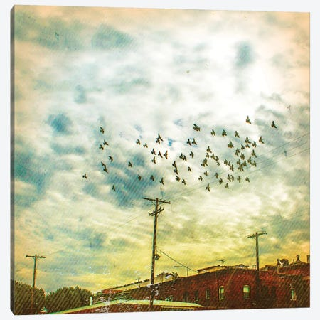 Birds on Wires V Canvas Print #TBW5} by Thomas Brown Canvas Art