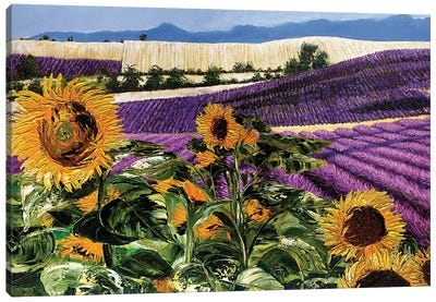 Sunflowers And Lavender Canvas Art Print