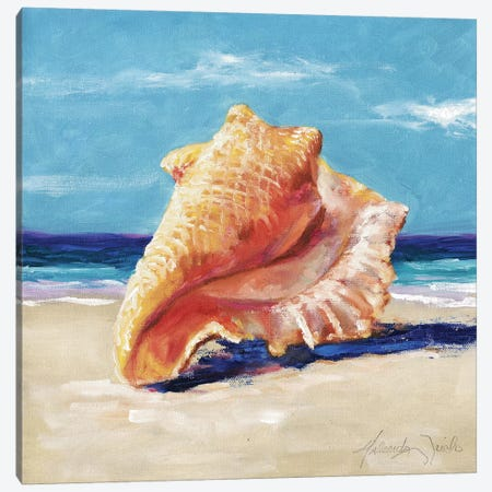 Conch Canvas Print #TCK43} by Malenda Trick Canvas Artwork