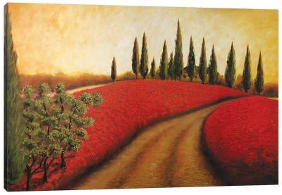 Tuscan Path I  Canvas Art Print
