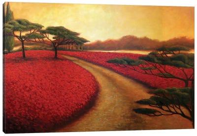 Tuscan Path II Canvas Art Print