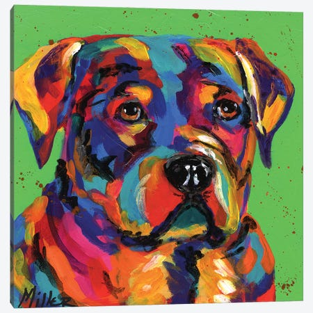 Robbie Rottweiler Canvas Print #TCY101} by Tracy Miller Canvas Artwork