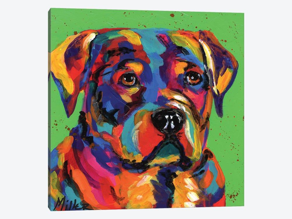 Robbie Rottweiler by Tracy Miller 1-piece Canvas Art Print