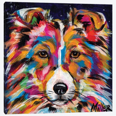 Sheltie Canvas Print #TCY109} by Tracy Miller Canvas Wall Art