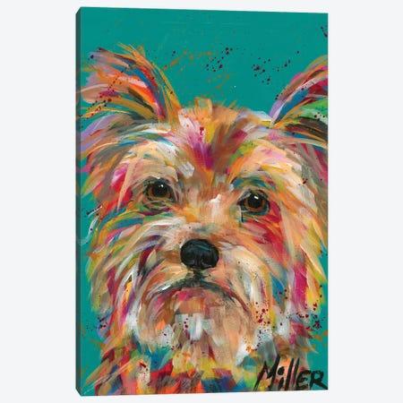Scruffy Yorkie Canvas Print #TCY144} by Tracy Miller Art Print