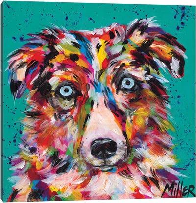Aussie Stare Canvas Art Print