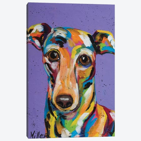 Italian Greyhound Canvas Print #TCY6} by Tracy Miller Canvas Art Print