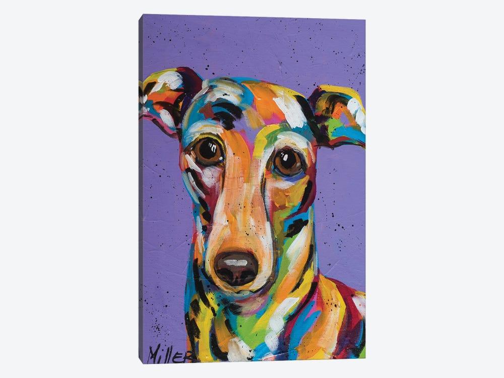 Italian Greyhound by Tracy Miller 1-piece Canvas Wall Art