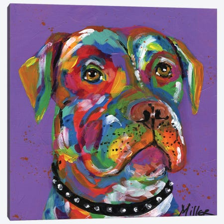 Petey Pit Bull Canvas Print #TCY90} by Tracy Miller Canvas Art Print