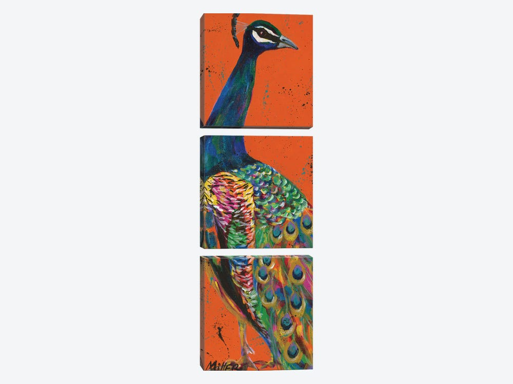 Proud Peacock by Tracy Miller 3-piece Canvas Art Print