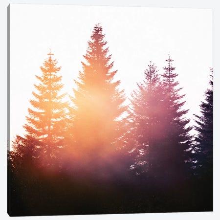Morning Glory Canvas Print #TDS14} by Tordis Kayma Canvas Print