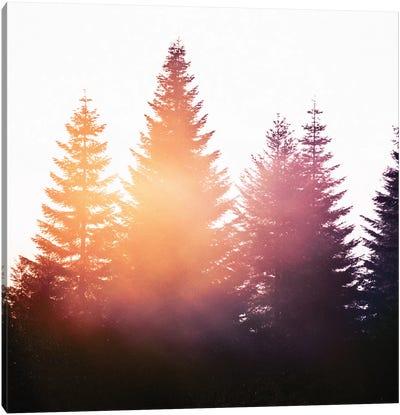 Morning Glory Canvas Art Print