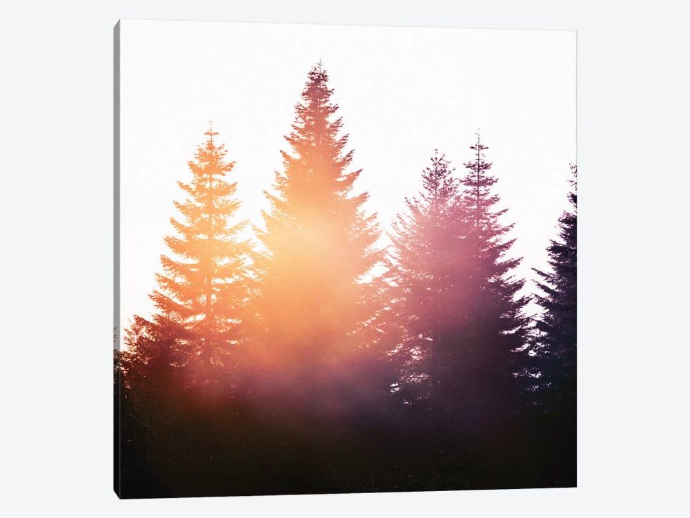 Morning Glory by Tordis Kayma 1-piece Canvas Artwork
