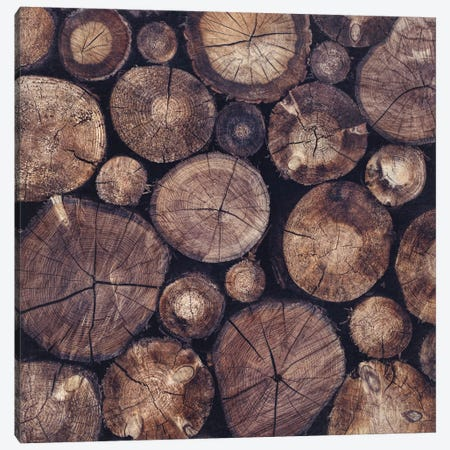 The Wood Holds Many Spirits Canvas Print #TDS20} by Tordis Kayma Art Print