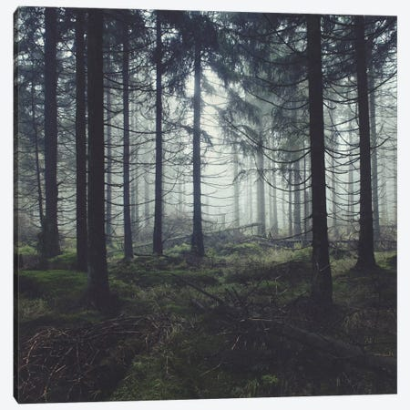 Through The Trees 3-Piece Canvas #TDS21} by Tordis Kayma Canvas Print