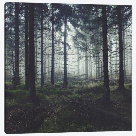 Through The Trees Canvas Print #TDS21} by Tordis Kayma Canvas Print