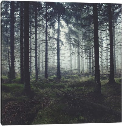 Through The Trees Canvas Art Print