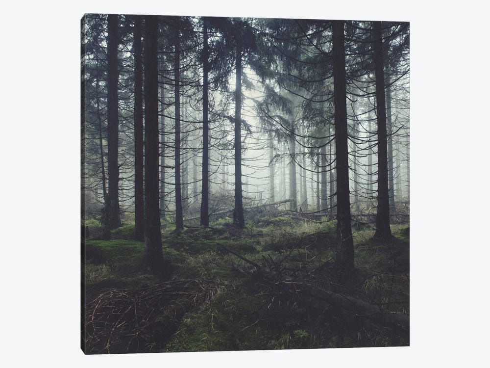 Through The Trees by Tordis Kayma 1-piece Canvas Wall Art