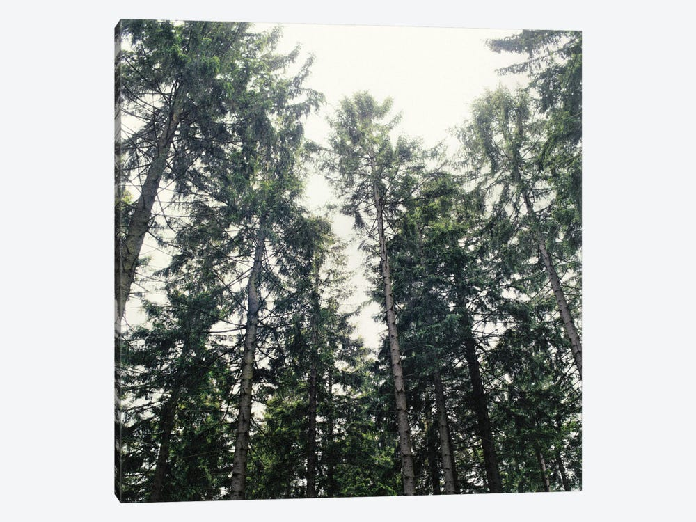 Up In The Woods by Tordis Kayma 1-piece Canvas Wall Art