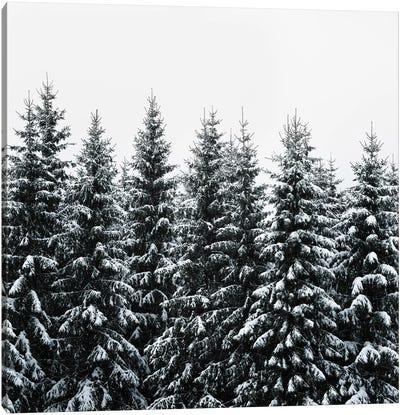 The White Bunch Canvas Art Print