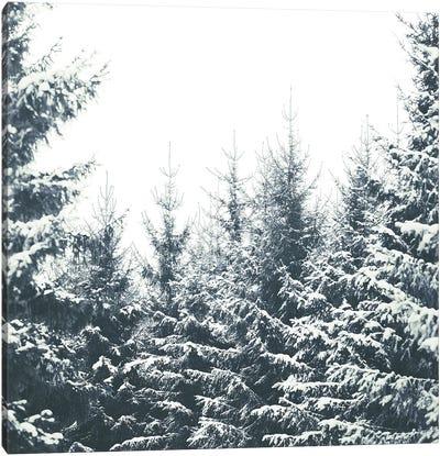 In Winter Canvas Art Print