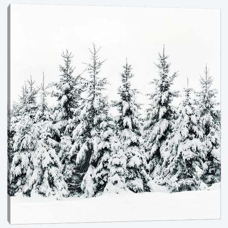 Snow Porn Canvas Print #TDS37} by Tordis Kayma Canvas Art Print