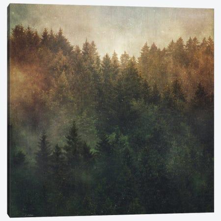 Asleep Canvas Print #TDS3} by Tordis Kayma Canvas Art Print