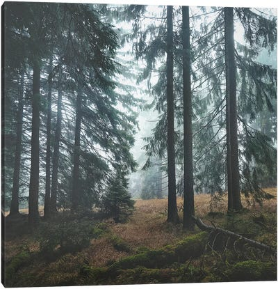 Deep In The Woods Canvas Art Print