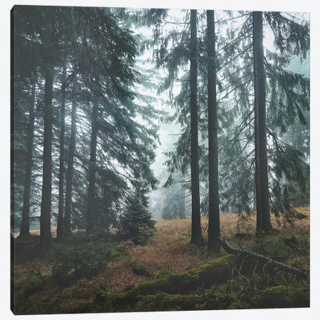 Deep In The Woods Canvas Print #TDS41} by Tordis Kayma Canvas Art Print