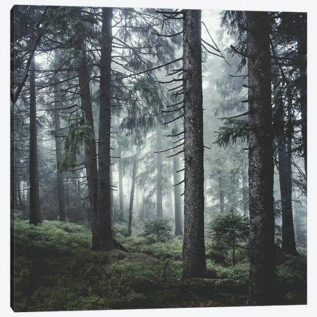 Path Vibes Canvas Print #TDS43} by Tordis Kayma Canvas Art Print