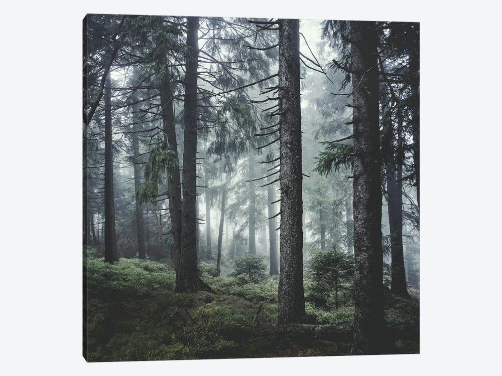 Path Vibes by Tordis Kayma 1-piece Canvas Art