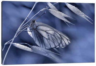 Mimicry... Canvas Art Print