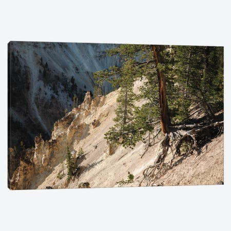 Hanging On At Yellowstone In Color Canvas Print #TEA19} by Teal Production Canvas Art Print