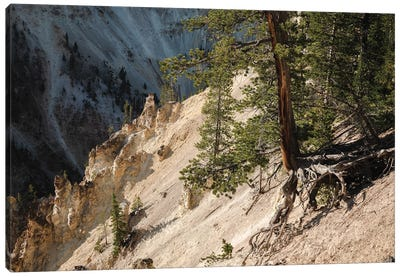 Hanging On At Yellowstone In Color Canvas Art Print