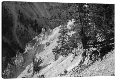 Hanging On At Yellowstone In Black And White Canvas Art Print