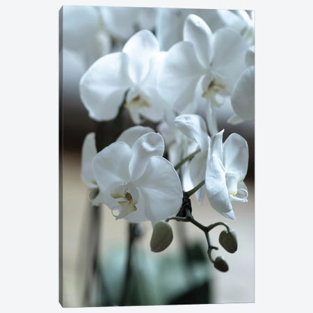 Delicate Orchids In Color Canvas Print #TEA23} by Teal Production Canvas Artwork