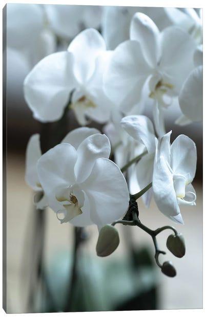 Delicate Orchids In Color Canvas Art Print