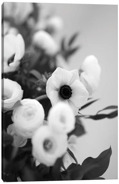 Anemones In Bloom Black And White Canvas Art Print