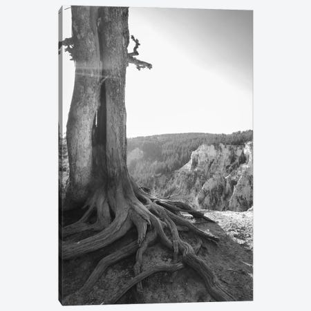 Rooted At Yellowstone In Black And White Canvas Print #TEA28} by Teal Production Canvas Wall Art