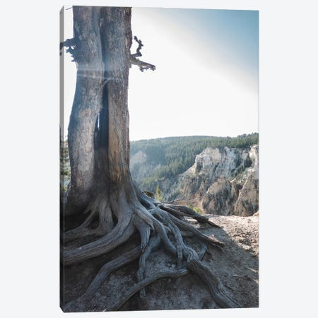 Rooted At Yellowstone In Color Canvas Print #TEA29} by Teal Production Canvas Art