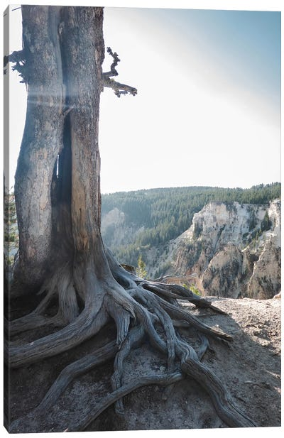 Rooted At Yellowstone In Color Canvas Art Print