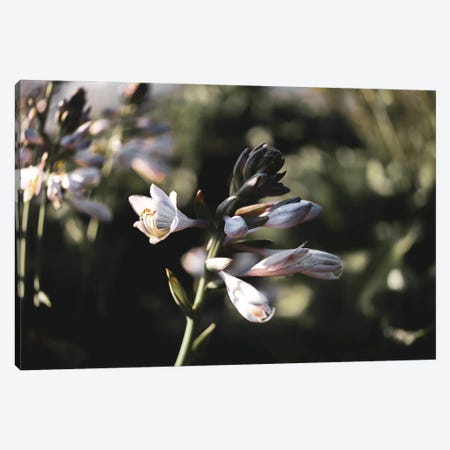 Lily Canvas Print #TEA66} by Teal Production Canvas Print
