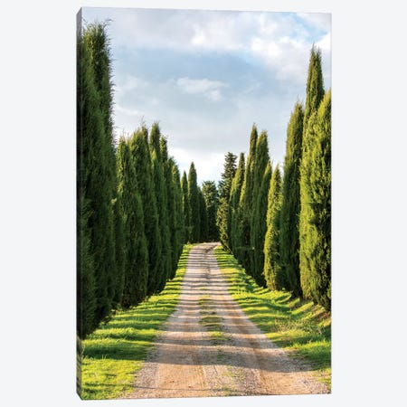 Italy, Tuscany, Long Driveway lined with Cypress trees Canvas Print #TEG13} by Terry Eggers Canvas Print