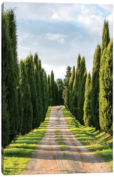 Italy, Tuscany, Long Driveway lined with Cypress trees Canvas Art Print