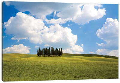 Countryside Cypress Trees, Tuscany Region, Italy Canvas Art Print